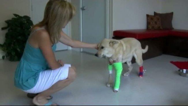 Rattlesnake Attack Leads to $10,000 Vet Bill - NBC 5 Dallas