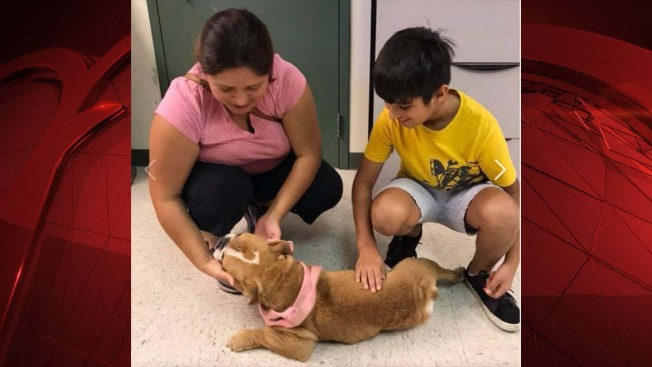 Fort Worth Family Reunited With Dog Year After She Was Stolen From Home