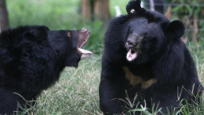 Florida Man Attacked by Bear in Yard: Police
