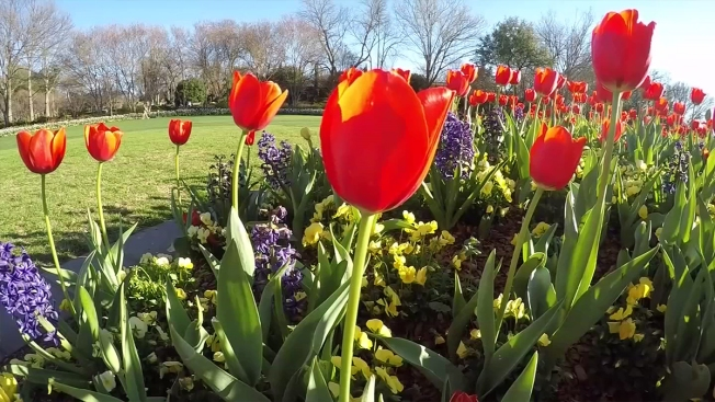 Early North Texas Spring Too Early To Plant A Garden Nbc 5