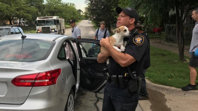 fort worth police officer comforts dog after crash nbc 5 dallas fort worth. Black Bedroom Furniture Sets. Home Design Ideas