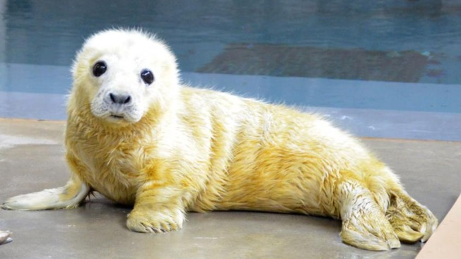 Birth of Seal Pup at National Zoo Sparks Adorable Twitter Battle