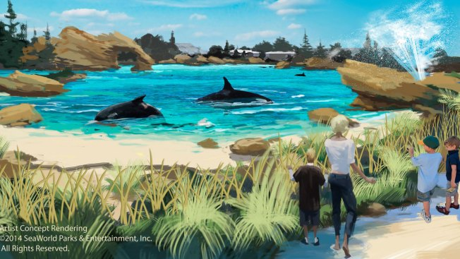 SeaWorld Plans to Expand Killer Whale Environments
