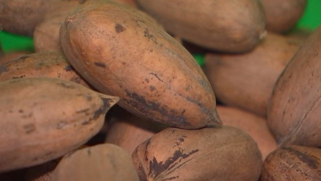 New Mexico Led US Pecan Production After Storm Hit Georgia