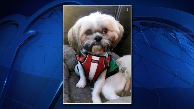 Plano Dog Inside Stolen Car Found Safe