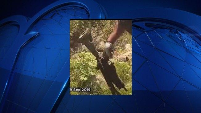 Man Reels in Rifle While Fishing at Lake Arlington