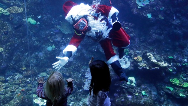 Scuba-diving Santa Brings Holiday Cheer to Fish, Museumgoers