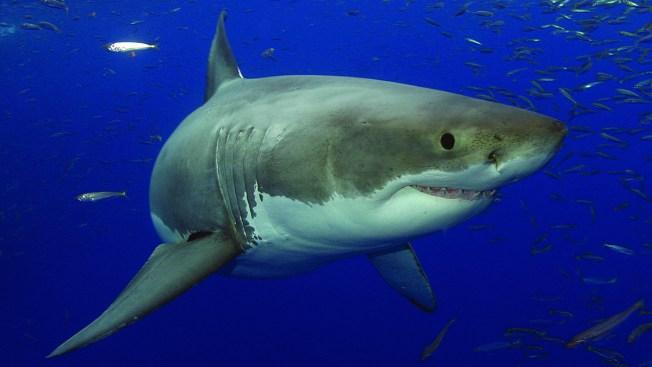 $325K 'Saving Sharks' Exhibit Opens at Texas State Aquarium
