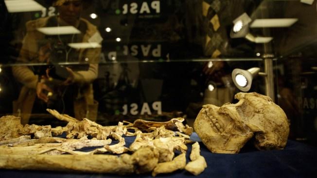 Rare Skeleton Shown of Human Ancestor, 3.6 Million Years Old