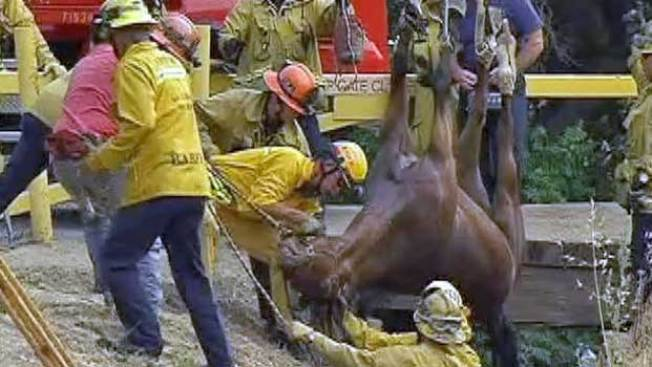 Win Whinny Situation: Horse Hoisted From Ravine