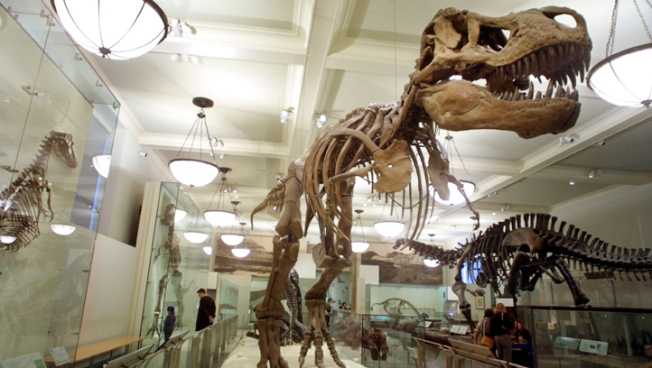 """Stolen"" Dinosaur Skeleton Auctioned Off"