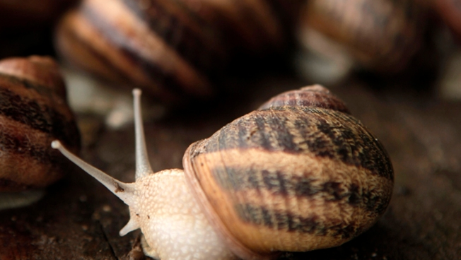 Traffic Stalled in Snail Spill