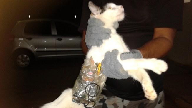 Cat Used in Brazil Prison Smuggling Try