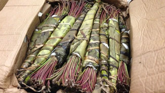 Texas Arrests Over Narcotic Plant Raise Terrorism Questions