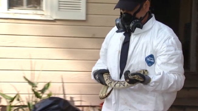 Calif. Teacher Who Hoarded Pythons in Home Pleads Guilty