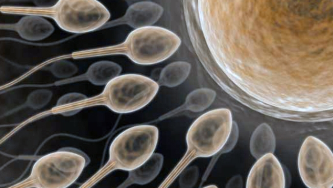 Study: More Sex May Help Damaged Sperm