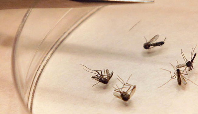 Dallas County Confirms 15th Case of West Nile Virus