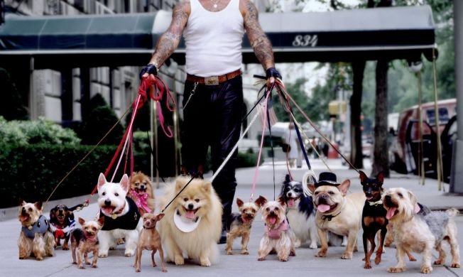 Dueling Dog Walkers War in Manhattan