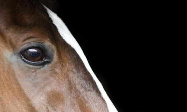 Horse Owners On High Alert For Equine Virus