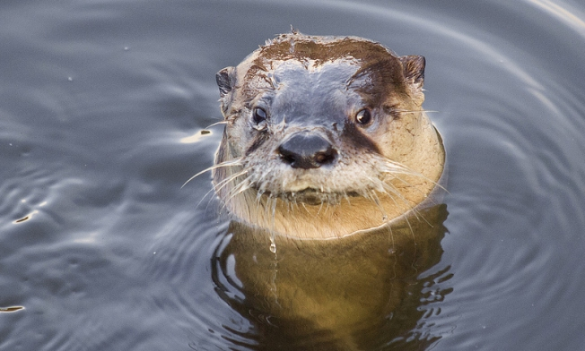 River Otter Makes Rare Appearance in San Francisco