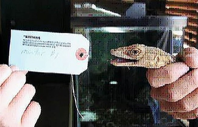 """Ex-Animal Planet Host: Selling Exotic Lizards a """"Stupid Thing to Do"""""""
