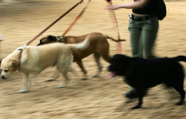 Animal Advocates Want to Muzzle Dog Ordinance