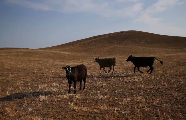 High Beef Prices Fueling Rustling Revival in Plains States