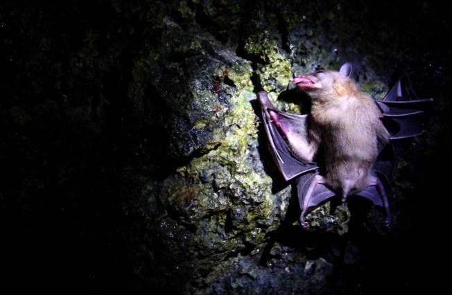 Rabid Bat Found in Dallas County