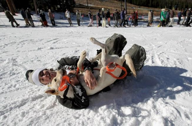 Dog-friendly Winter Destinations