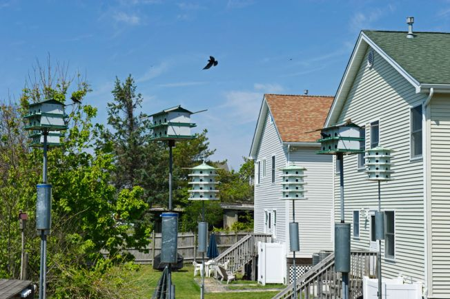 Student's Passion for Purple Martins Inspires Others