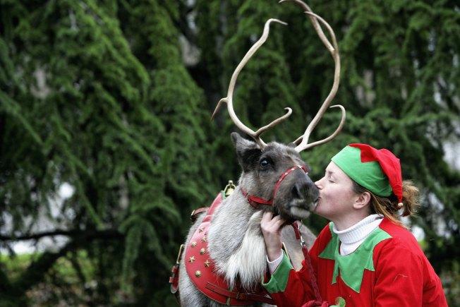 Reindeer (Salami) Coming to Brooklyn?