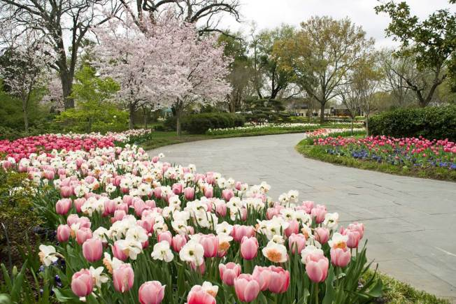 Dallas Arboretum Ranked Second Best Garden In The World