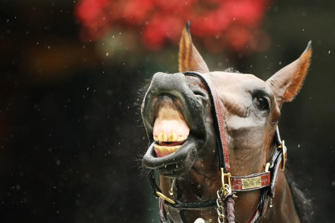 Nay! Horse Meat Rules to Get Stricter