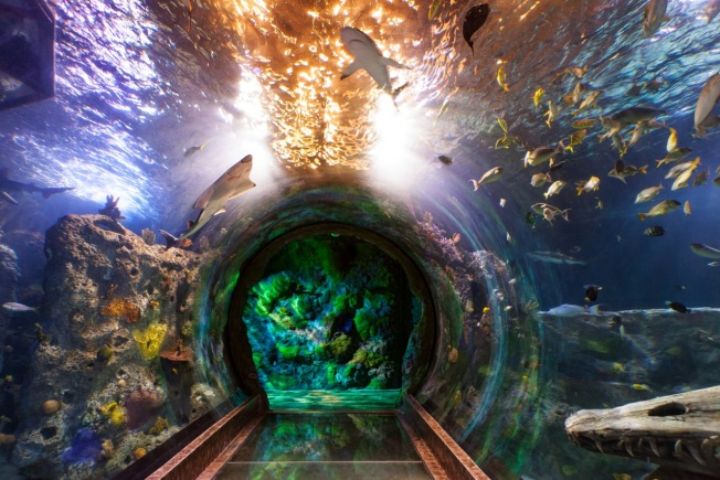 You're Gonna Need a Bigger Boat: Aquarium