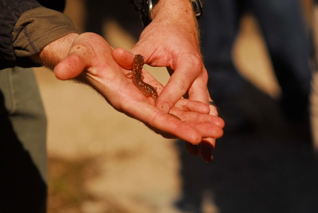 Feds: $29M to Protect Texas Salamander Habitat