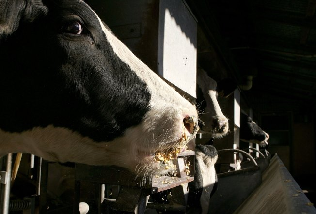 The Great Dairy Compromise: Facebook No Longer Lactose-Intolerant