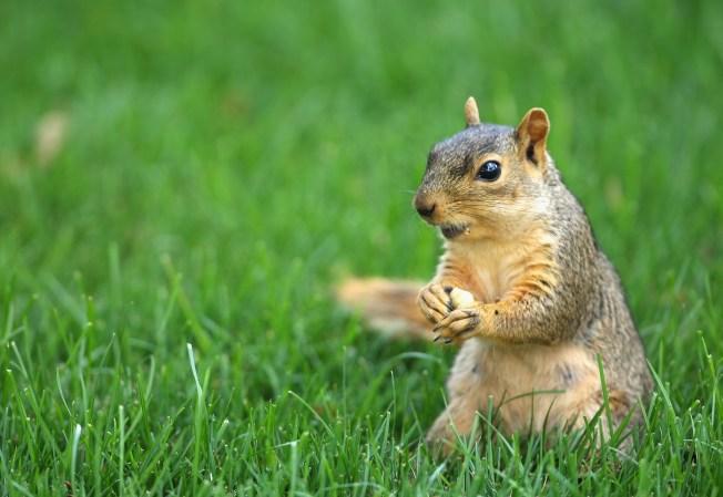 Baby Squirrel Survives Pepper Spray