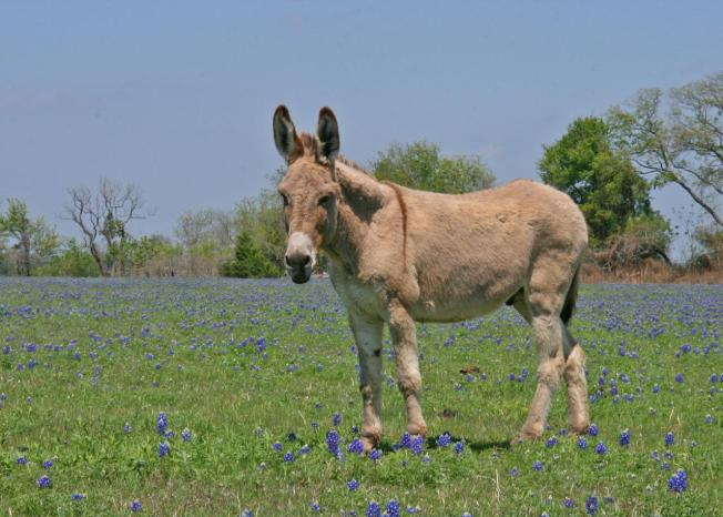 Donkeys Abandoned by the Hundreds in E. Texas