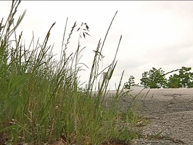 Taller Grass Means More Green For Fort Worth
