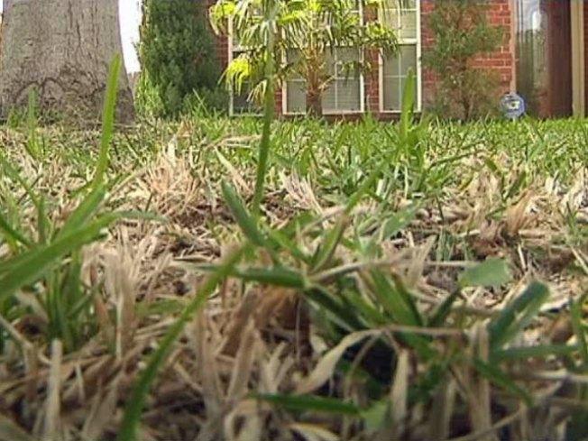 The Grass Fungus Among Us