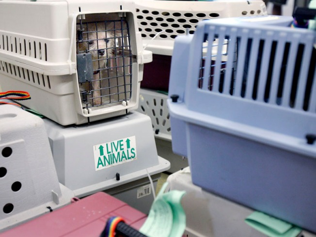 Baby, 58 Dogs Rescued from Filthy Home