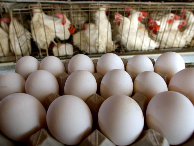 Parents of Sickened Child Sue Egg Manufacturer