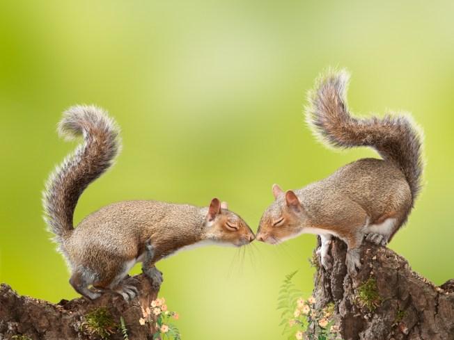 It's Squirrel Appreciation Day!