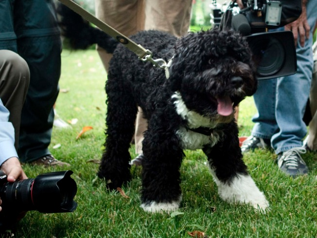 Everybody Poops: White House Denies Bo's Mile-High Mistake
