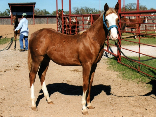 Killing of Prized Filly Investigated