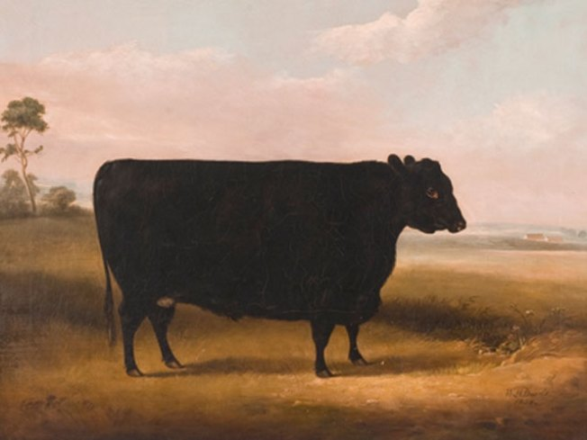 Cow Art Sells for More Than $500,000