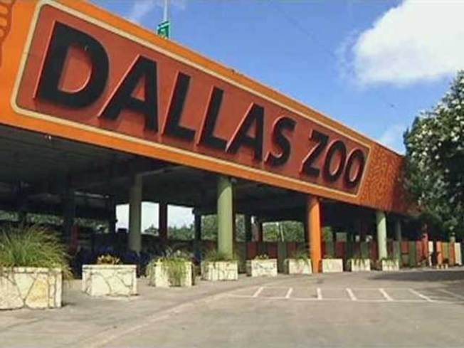 Dallas Zoo to Have Six Elephants by Memorial Day