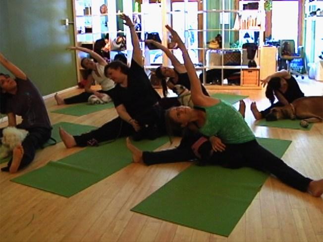 "Downward Facing ""Dog""  -- Yoga for Pooches"