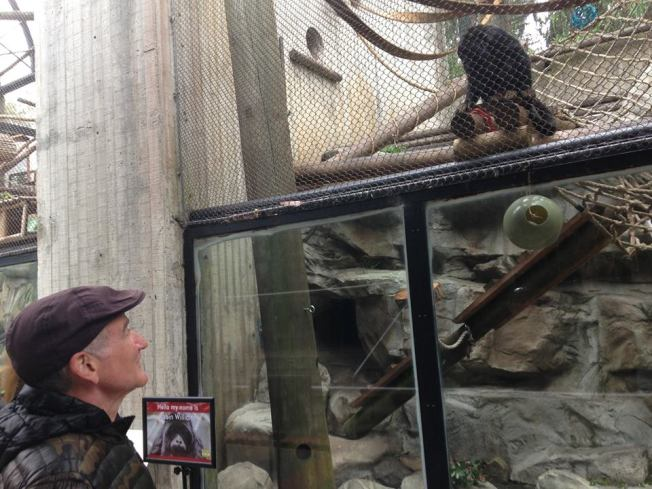 Monkey Named for Robin Williams at San Francisco Zoo
