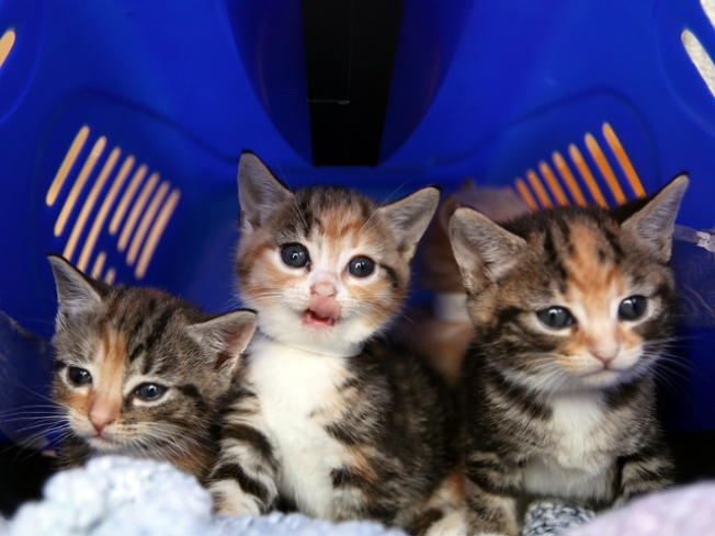 9/22: Human Rights, Local Food and Jazz For Kittens